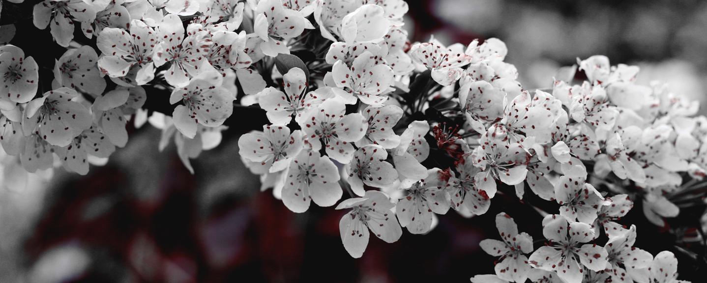 winterflowers